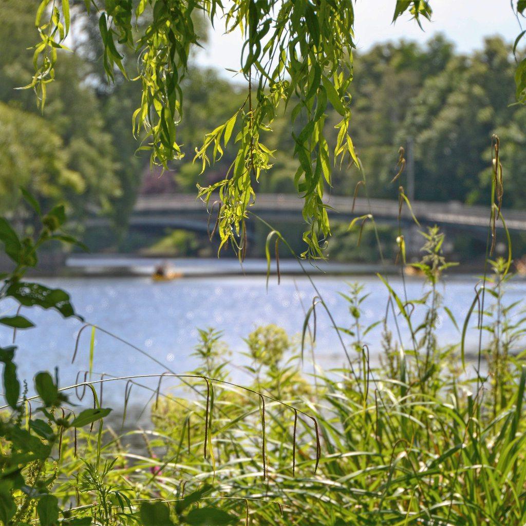Der Hayns Park in Eppendorf 04