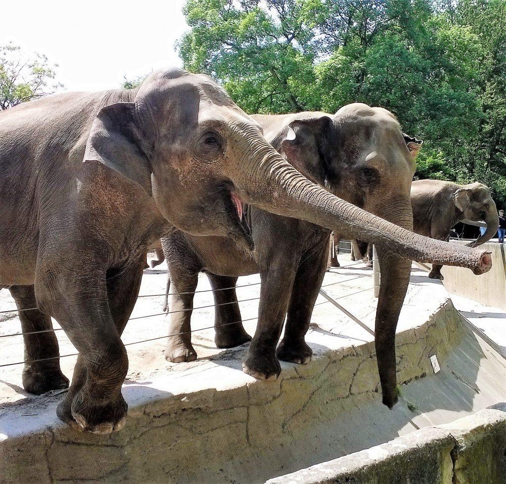 Elefanten bei Hagenbeck