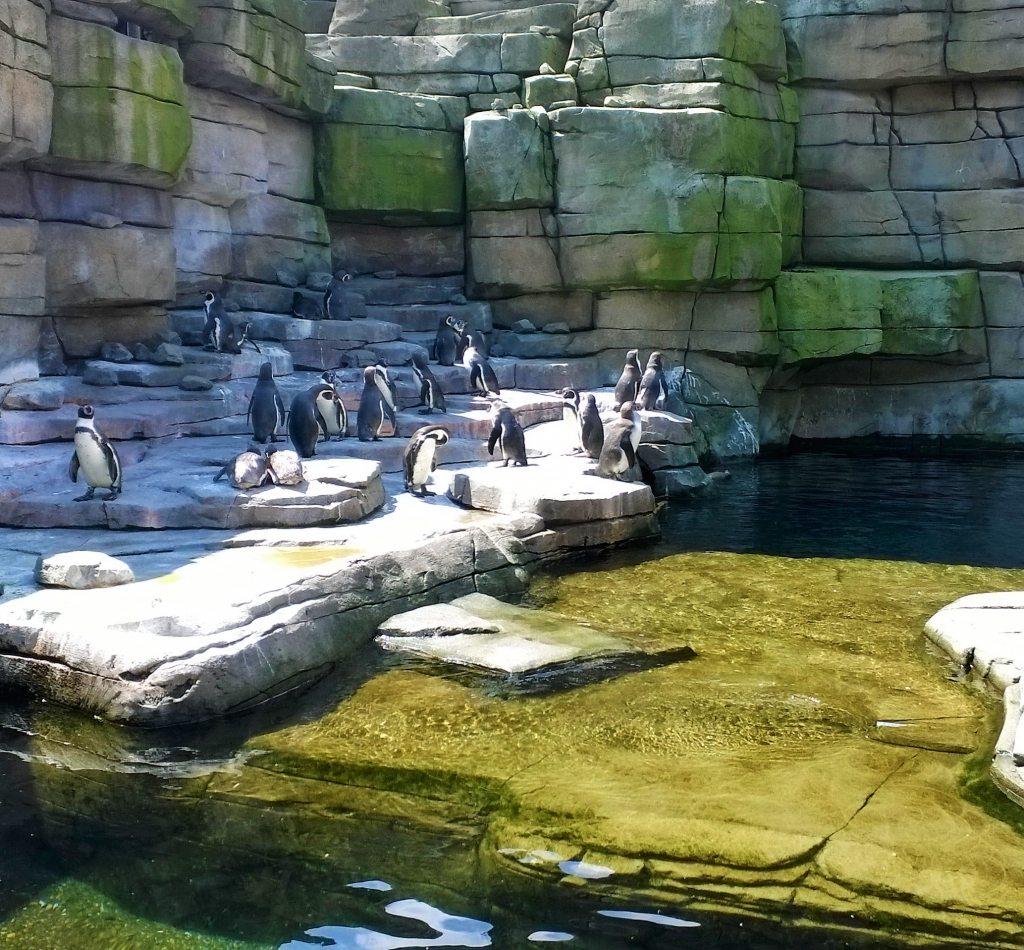 Pinguine Hagenbeck