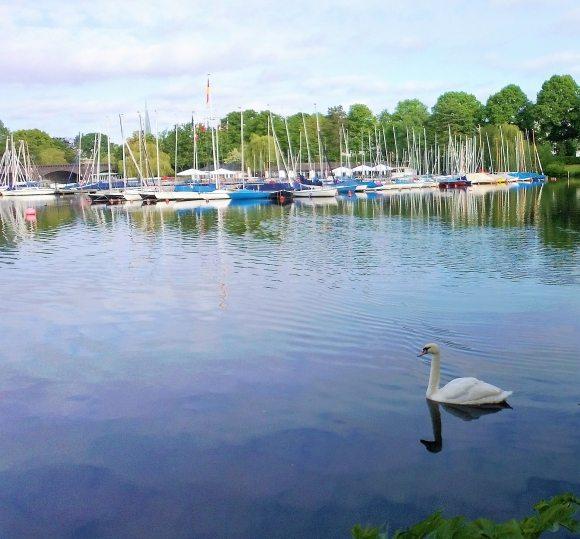 Alster Schwan Boote Sommer Hamburg