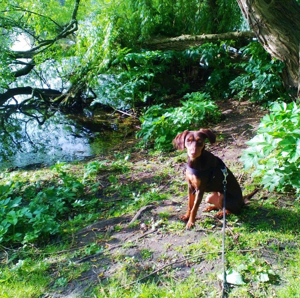 Hundespaziergang an der Alster Hamburg