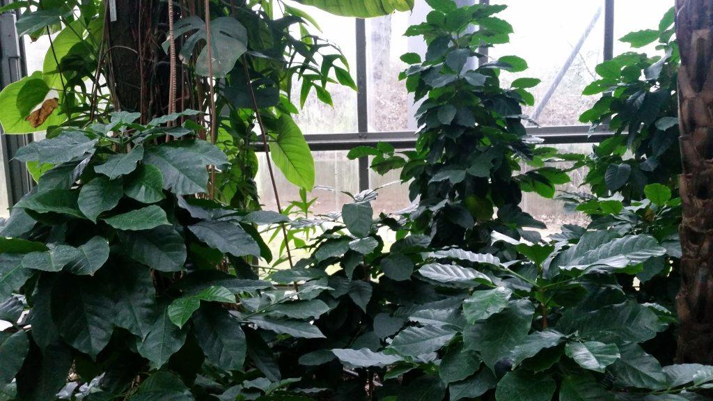 Botanischer Garten_Typisch_Hamburc