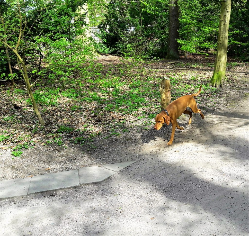 Gassi gehen im Hundeparadies Stadtpark Hamburg