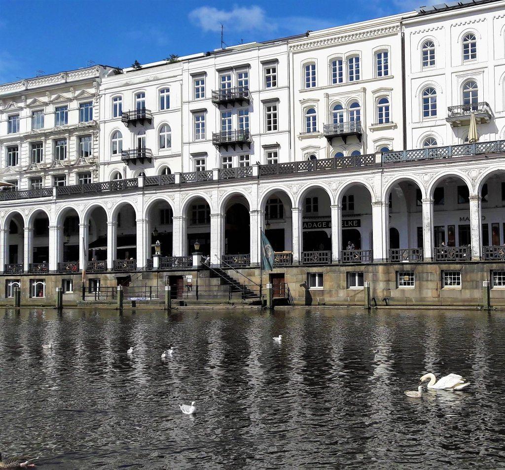 Schwäne und Enten Alsterarkaden Hamburg