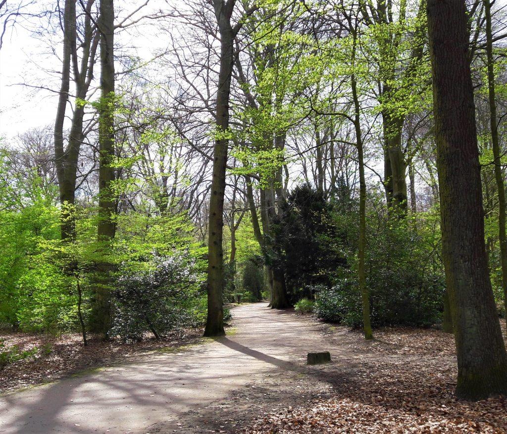 Wald Spaziergang im Stadtpark Hamburg