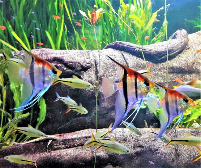 Fische im Tropenaquarium Hagenbeck