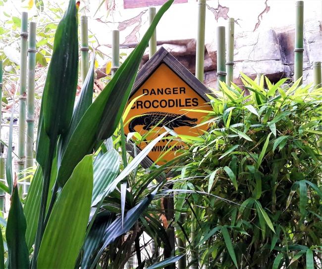 Krokodile Tropenaquarium Hagenbeck
