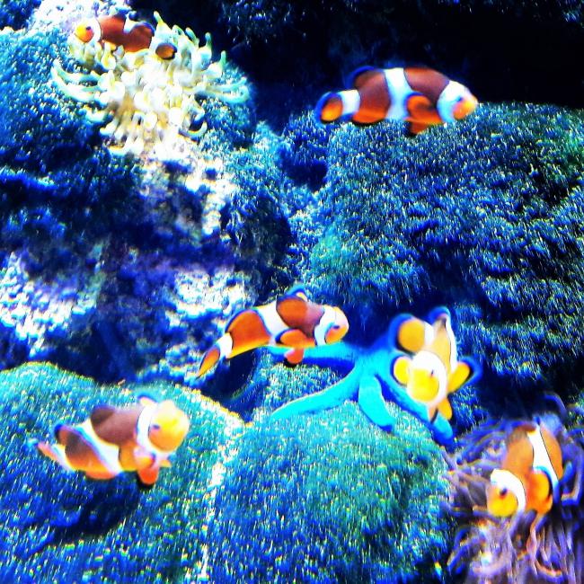 findet Nemo Clownfische Tropenaquarium Hamburg