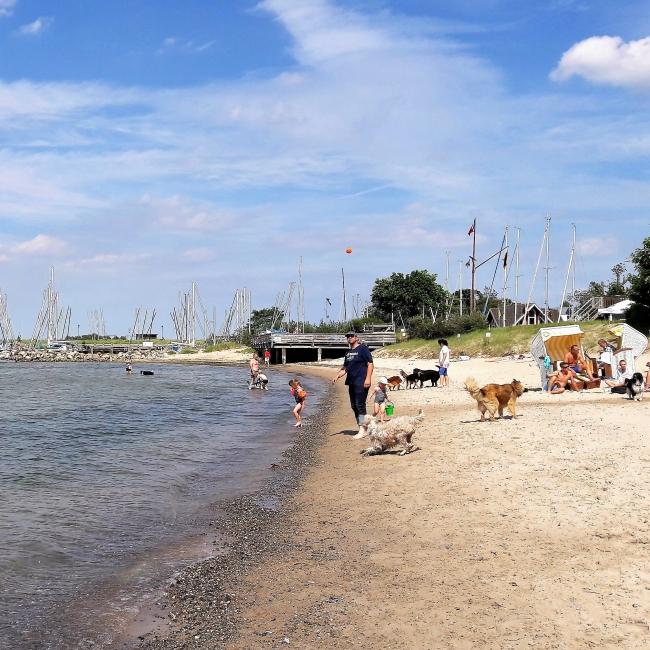 Hundestrand Niendorf Timmendorfer Strand Ostsee