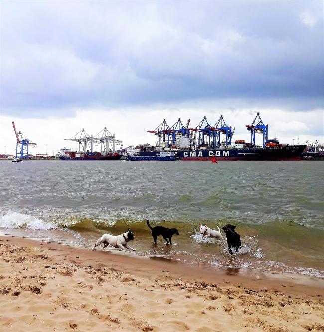 mit Hunden umsonst und draußen Elbstrand Hamburg