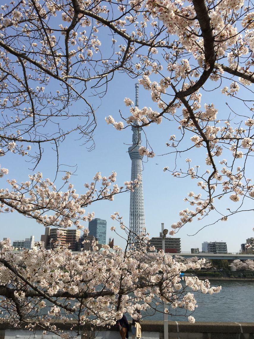 tokio_vs_hamburg_tokio_skytree