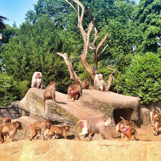 Tierpark Hagenbeck Hamburg