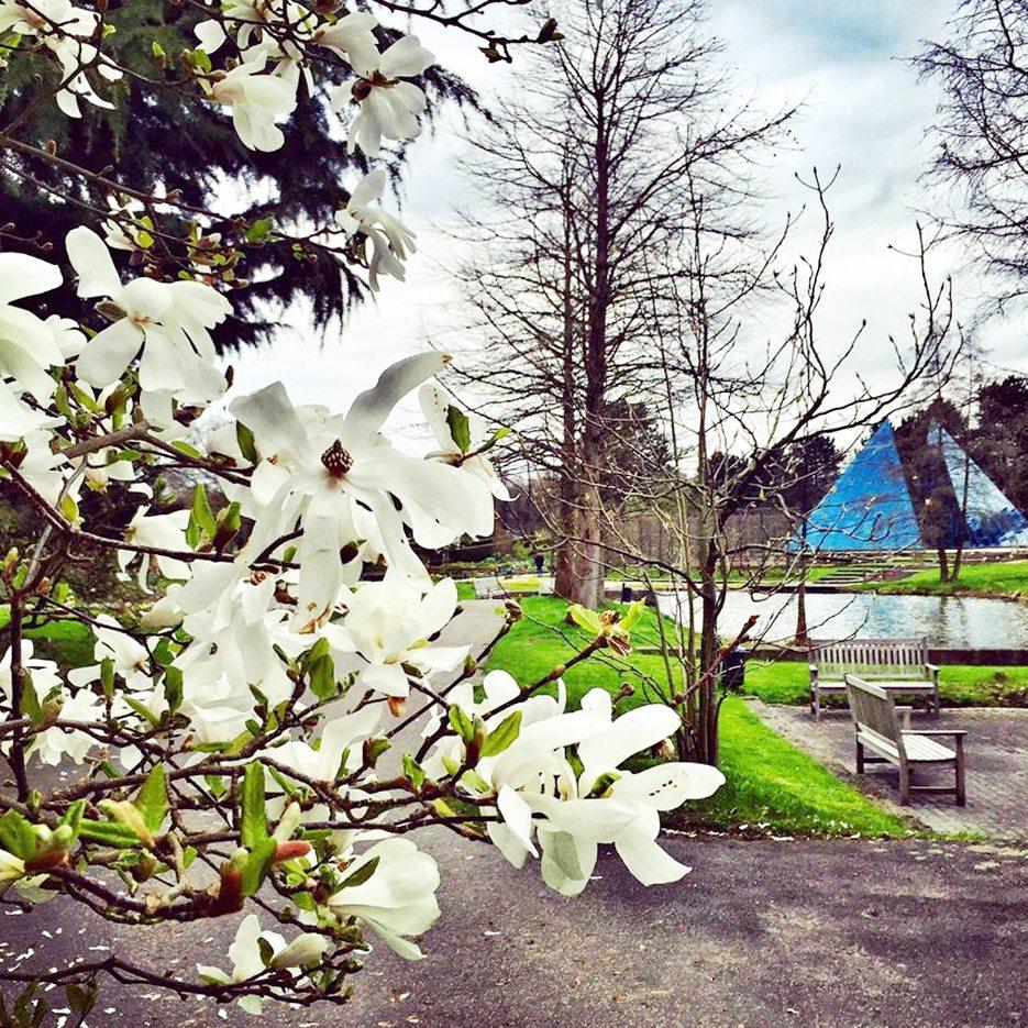 Lieblingsplatz Der Woche Loki Schmidt Garten Typisch Hamburch