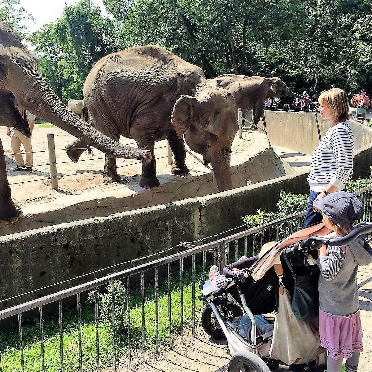Hagenbeck Elefanten