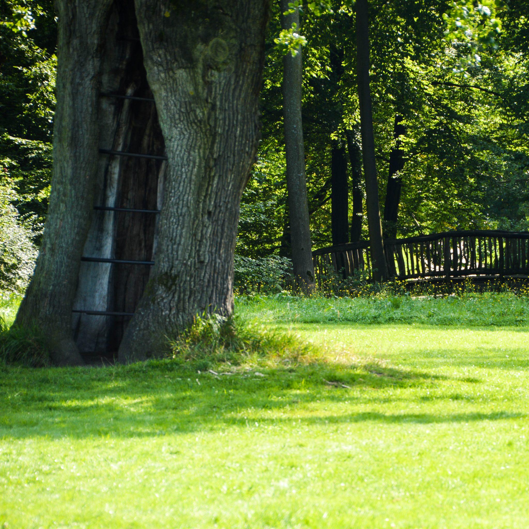 Jenischpark und uralte Bäume
