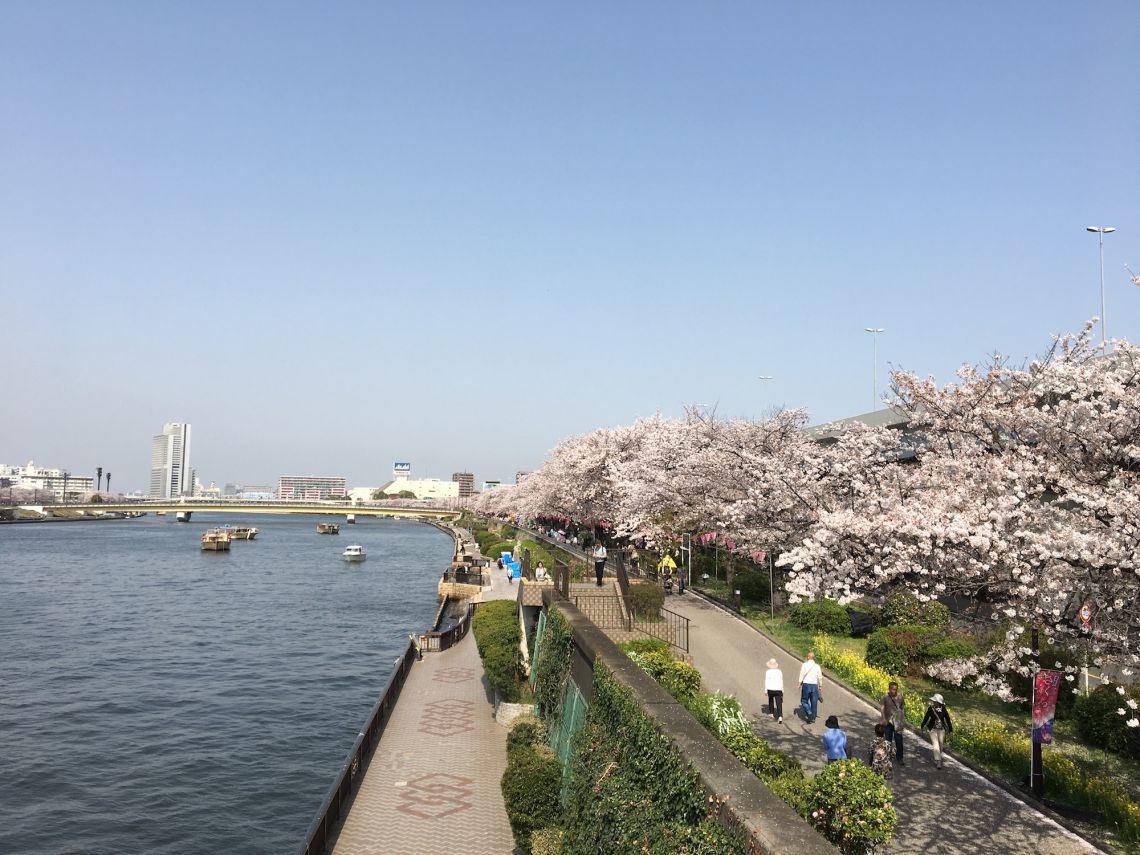 tokio_vs_hamburg_cherry_blossom