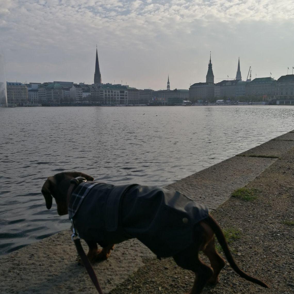 Sommer mit Hund - Binnenalster