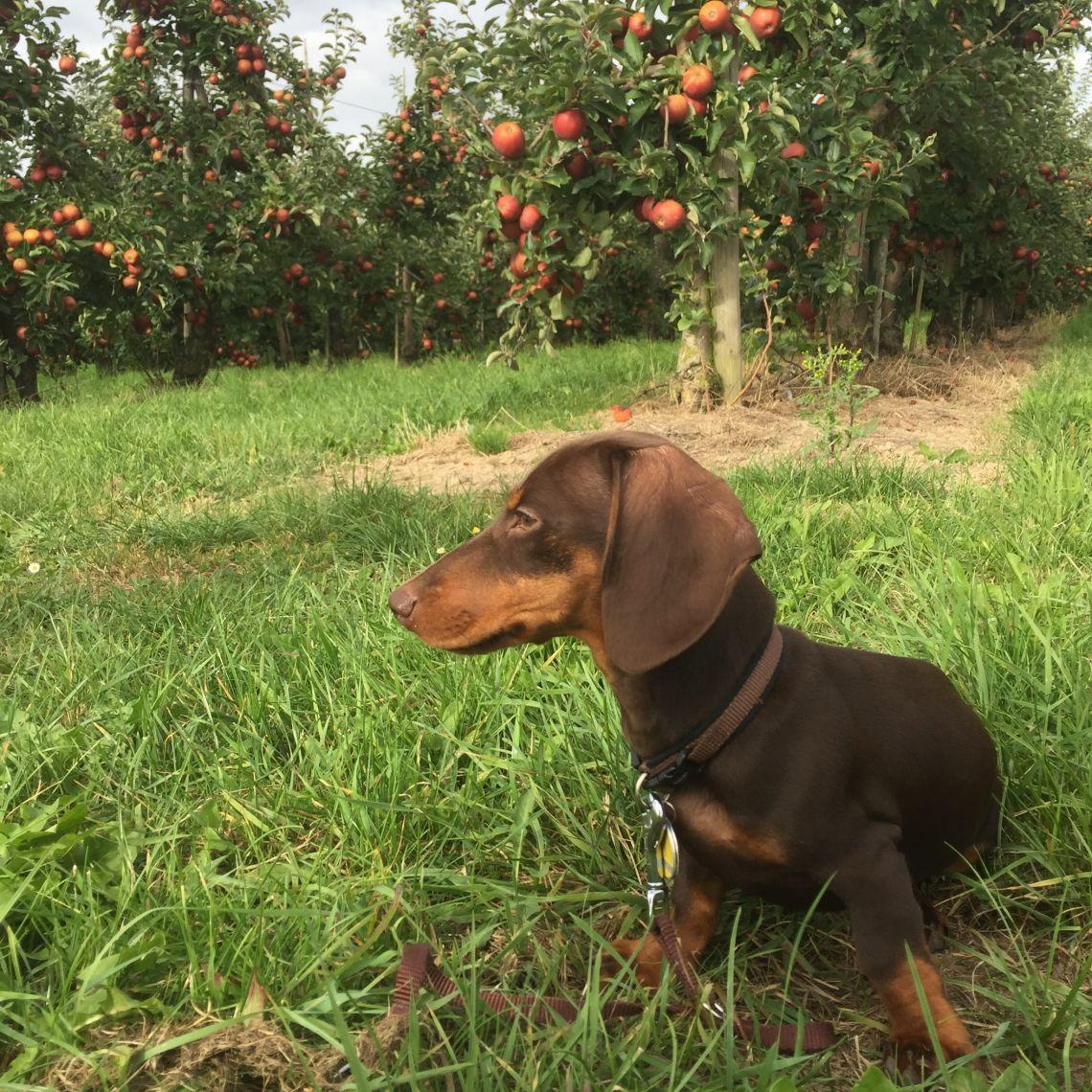 Sommer mit Hund - Altes Land